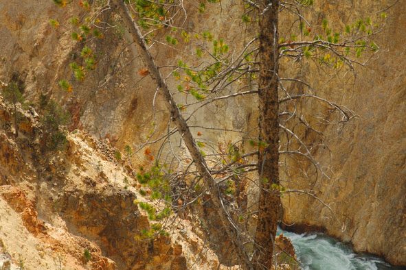 Am Yellowstone Canyon